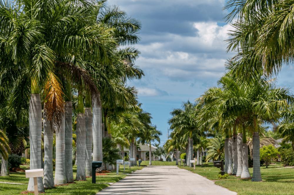 Park Limousine Palm Beach Florida